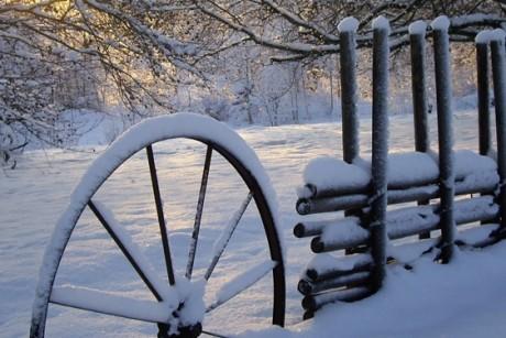 vinter_gardesgard